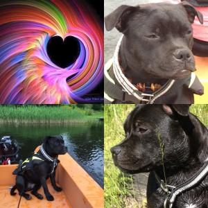 Cocos fyra bilder